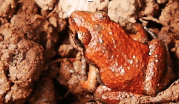 Extinctions in our neighbourhood – Tales from the Flinders Ranges