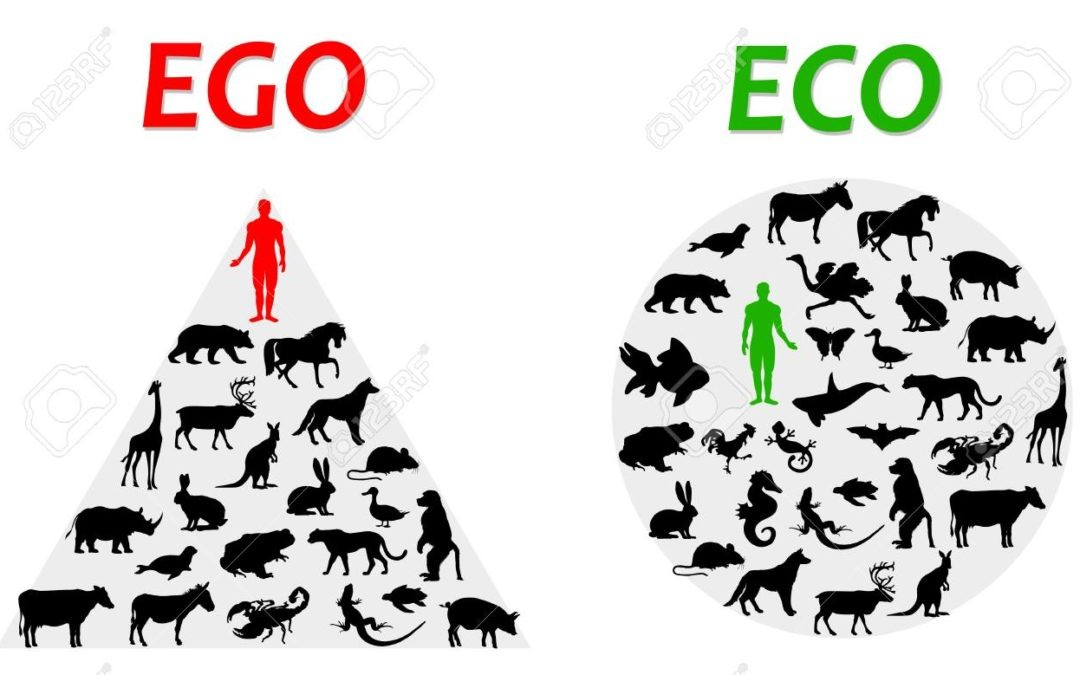 The link between the Extinction Crisis and Covid19